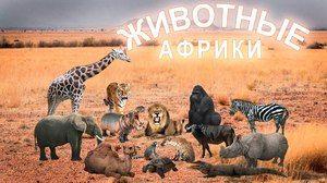 Afrika in živalsko kraljestvo: afriške živali