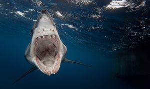 Morski psi so nevarne vrste