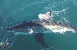 Hitrost napadov Mako Shark Attack