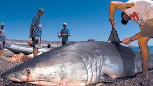 Ribiči, ki so ujeli mako