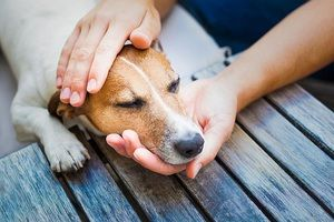 Alergije pri psih: simptomi, diagnoza, zdravljenje, preprečevanje