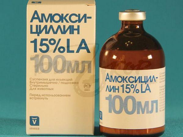 Amoksicilin 100 ml