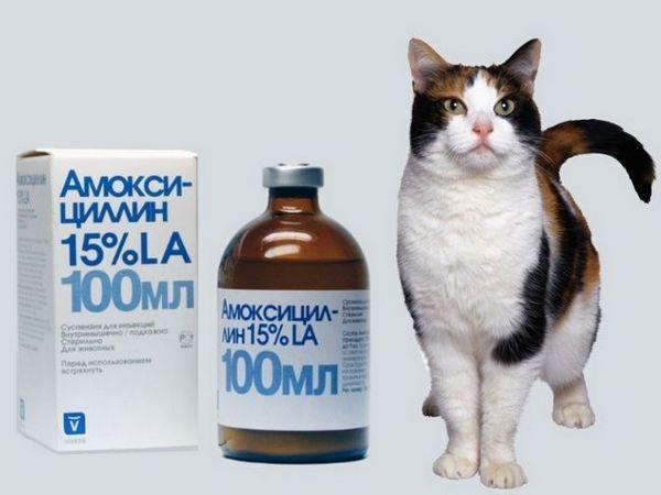 Suspenzija amoksicilina