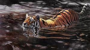 Sibirski tiger se ne boji vode