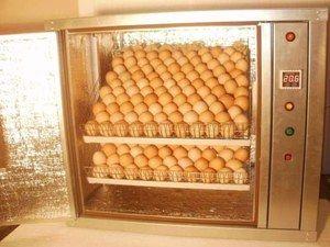 Avtomatski inkubator - kaj je to