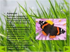 Butterfly Admiral: opis, vernalna oblika, značilnost vrste