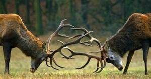 Duel jelenjadi za uslugo ženske