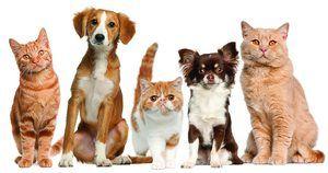 Skrb za pse in mačke: navodila za uporabo, načelo delovanja