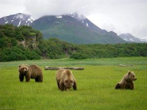 Habitati rjavih medvedov