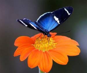 Kaj metulji jedo v naravi