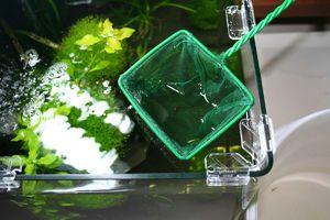 Čiščenje akvarija doma