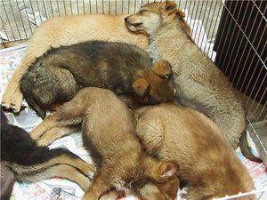 Torba za pse: simptomi, zdravljenje