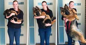 Do katerih starosti psi rastejo, fiziološki razvoj