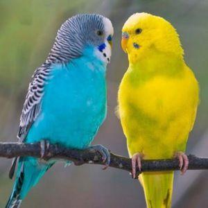 Nekaj papagaja