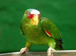 Svet papagaja