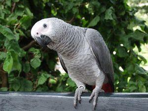 Parrot pohlepno aloha (zvočnik)