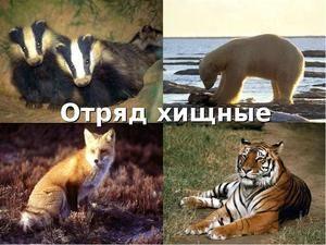 Predatorske živali sesalcev: opis in vrste