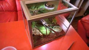 Škorpijon doma