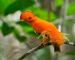 Eksotične ptice: vrste in opis