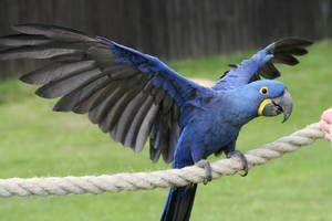 Eksotične ptice: vrste