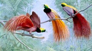 Eksotične ptice: opis