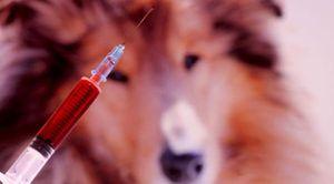 Izvajanje evtanazije živali