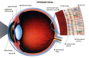 Odstopanja v percepciji barve mrežnice