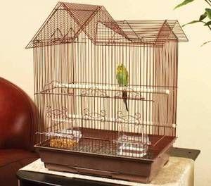 Parrot v kletki mora biti prijeten