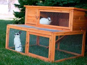 Kako skrbeti za dekorativni zajček