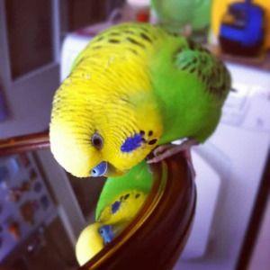Paprika in ogledalo