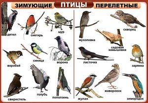 Kakšne vrste ptic: njihova imena in opis