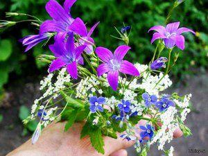 Kakšne gozdne cvetice dobro rastejo na naših cvetličnih posteljah