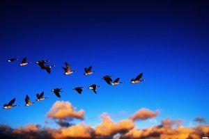 Kateri ptici najprej plujejo proti jugu