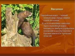 Katere živali so vključene v rdečo knjigo Urals