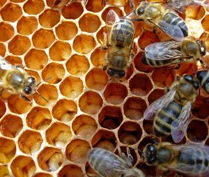 Proizvodnja medu