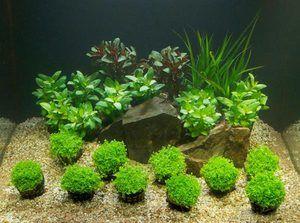 Nutritivni primer v akvariju