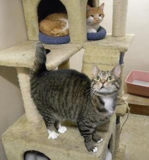 Zakaj morate sterilizirati mačke?