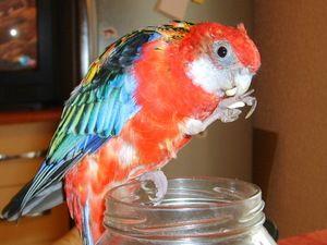 Kako skrbeti za papigo