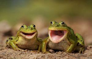 Kdo jesti žabe in kaj jesti v svojem naravnem okolju