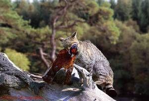 Dietna mačja prehrana