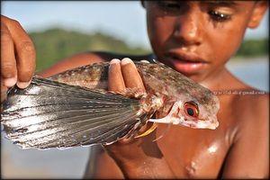 Fant in leteče ribe