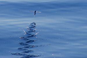 Ribe letijo nad vodo