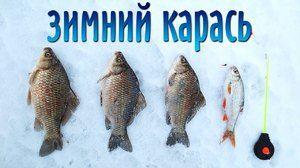 Sprehajalce krompirja spomladi in poletju: skrivnosti dobrega ribolova