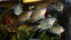 Majhen akvarij - 10 najcenejših rib akvarij