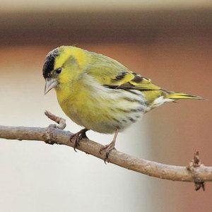 Habitat in videz ptic