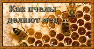 Čebelji med - kako priti do zdravljenja