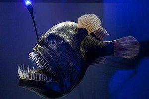 Ribiški ribič živi globoko