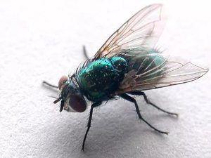 Zeleni žuželke