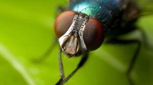 Kako prati muhe s tačkami