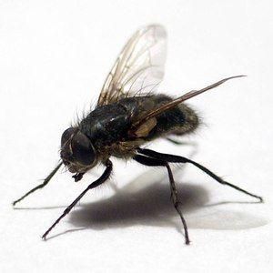 Tace muhe na telesu